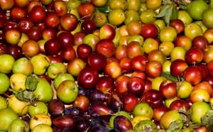 αγρια φρούτα