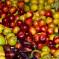 Άγρια φρούτα του Γράμμου
