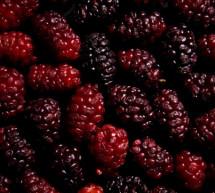 Φρούτα του Βουνού και του Σαλονιού